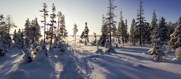 Frosty forest Royalty Free Stock Images