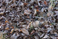 Frosty forest carpet Stock Photo