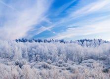 Frosty Forest debajo del cielo azul Fotografía de archivo libre de regalías