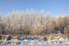 Frosty forest Stock Images