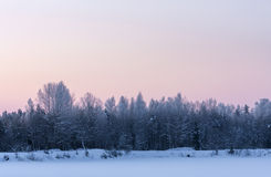 Frosty forest at sunrise in winter Stock Photography