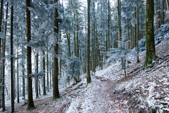 Frosty forest trail Royalty Free Stock Photography