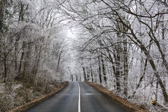 Frosty forest Stock Photos