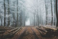 Free Frosty Forest With Fog Stock Photo - 202498900