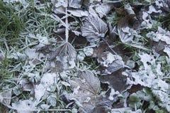 Frosty garden leaves Stock Image