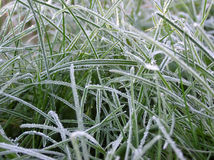 Frosty grass. At early morning Stock Photos