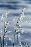 Frosty grass Stock Photos