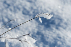 Frosty grass Stock Photography