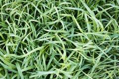 Frosty Grass Imágenes de archivo libres de regalías