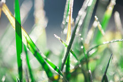 Frosty Grass Royalty Free Stock Photos