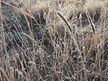 Frosty grass in cold autumn morning stock photos