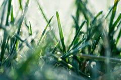 Frosty Grass di mattina fotografie stock