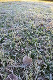 Frosty grass Royalty Free Stock Photo