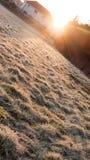 Frosty Grass durante salida del sol Foto de archivo libre de regalías