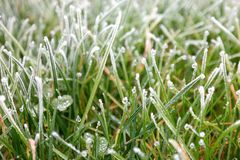 Frosty grass. A field with frosted grass Royalty Free Stock Images