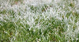 Frosty grass. A field of frosted grass Royalty Free Stock Images