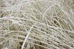 Frosty Grass Royalty Free Stock Images