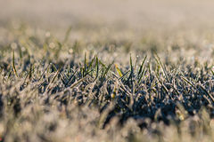 Frosty grass lawn with copy space Royalty Free Stock Photography