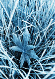 Frosty grass and leaf. Toned blue Royalty Free Stock Photography
