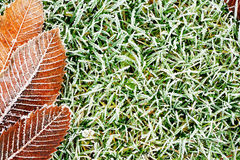Frosty grass and leaves background Royalty Free Stock Photos