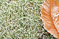 Frosty grass and leaves background Stock Image