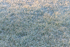 Frosty grass. In the morning Stock Photo