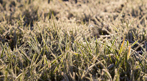 Frosty Grass in the morning Stock Image