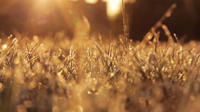 Frosty Grass stock video footage