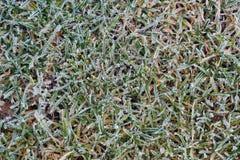 Frosty grass Stock Photos