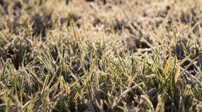 Frosty Grass por la mañana Imagen de archivo