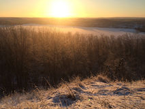 Frosty grass at winter sunset. Covered in snow stock photography