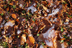 Frosty ground Royalty Free Stock Photography