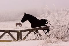 Frosty horse in winter Stock Photo