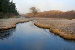 Frosty Island Wetland Fotografia Stock