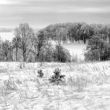 Frosty january day. Royalty Free Stock Photo
