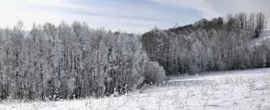 Frosty january day. Royalty Free Stock Images