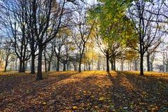 Frosty Landscape Lizenzfreies Stockbild