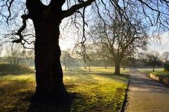 Frosty Landscape Photographie stock libre de droits