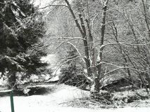White winter landscape in Serbia with trees covered in snow and a winding road royalty free stock photography