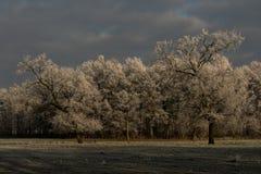 frosty lasu Zdjęcia Royalty Free