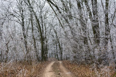 frosty lasu zdjęcie stock