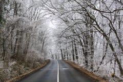 frosty lasu zdjęcia stock