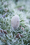 Frosty Leaf. A winters morning and frost has covered the lawn making beautiful art work of the leaves Royalty Free Stock Image