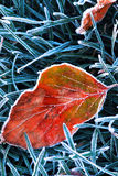 Frosty leaf Stock Image