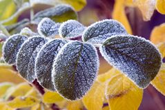Frosty leaf. A leaf covered in frost one early fall morning Royalty Free Stock Images