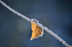 Frosty leaf. Frosty autumn leaf and thin branch against blue bokeh background Royalty Free Stock Photos