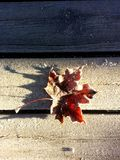 Frosty leaf. Frosty brown leaf on a icy bench on a sunny fall day Royalty Free Stock Photo