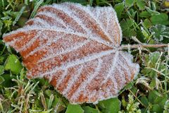 Frosty leaf and grass. With ice crystals in the garden Stock Image