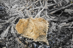 Frosty leaf. Lying on the frozen ground Stock Photography