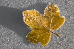 Frosty Leaf Macro Stock Images